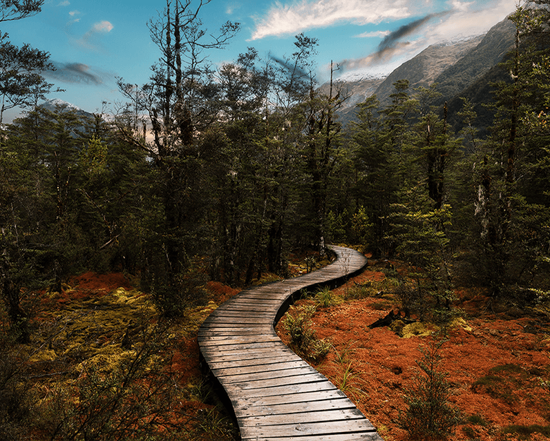 A winding boardwalk meandering over swampland and through foreston the Kepler Track, Fiordland.